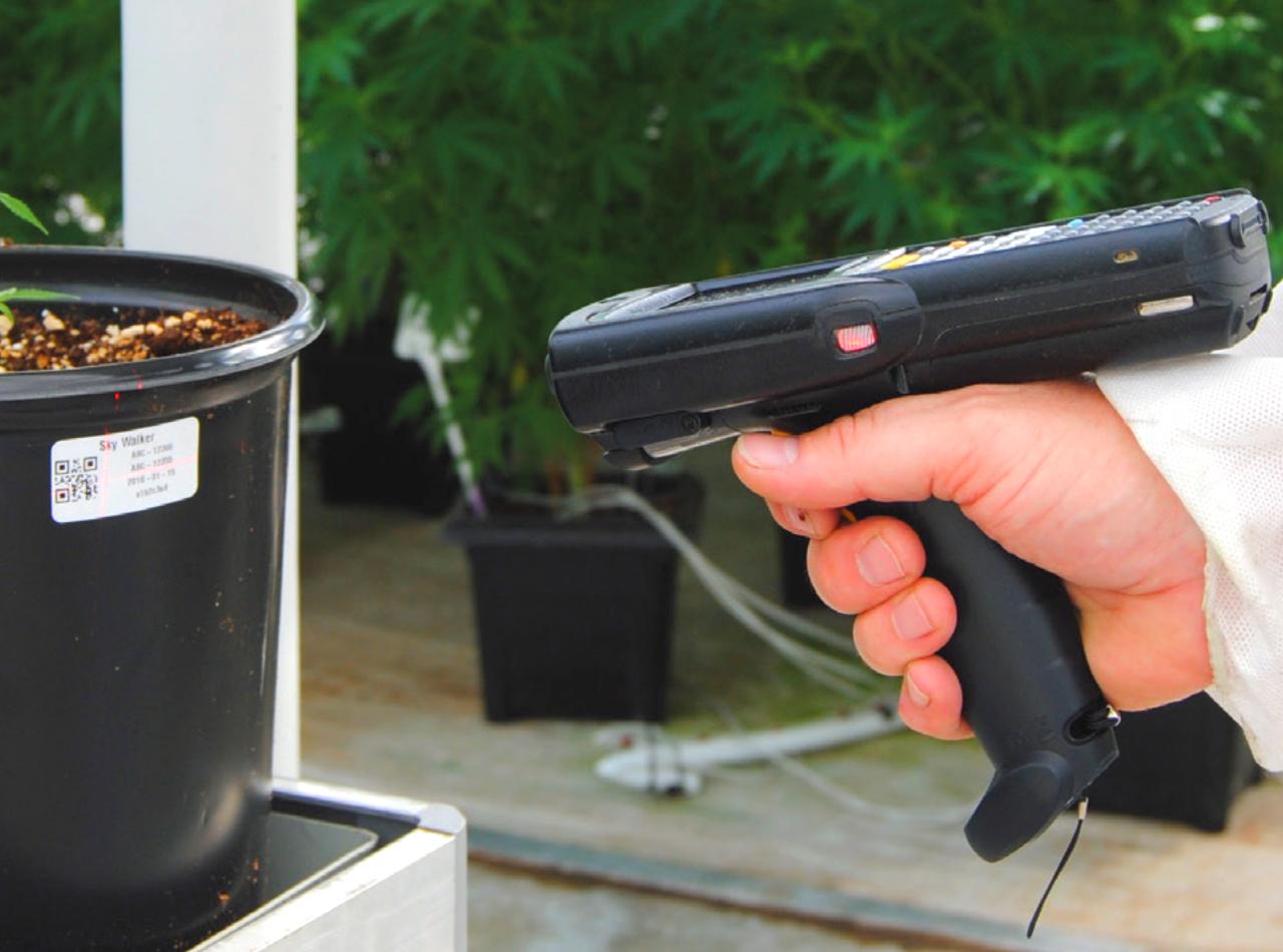Cannabis scanner