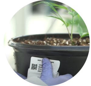 Compliance labeling for cannabis growers